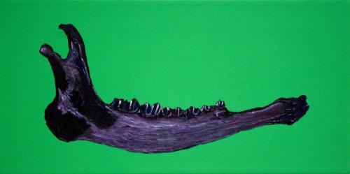 Irish Giant Elk Jaw Bone